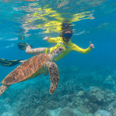 Snorkel In Pristine & Untouched Areas Of The Great Barrier Reef
