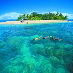 Snorkel in safety just off shore from Low Isles with sea turtles on the Great Barrier Reef in Queensland Australia