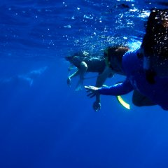 snorkel with Dwarf Minke Whales Port Douglas during the months of July-August