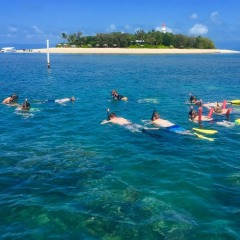 Snorkel off Low Isles | Port Douglas Private Charter Boat