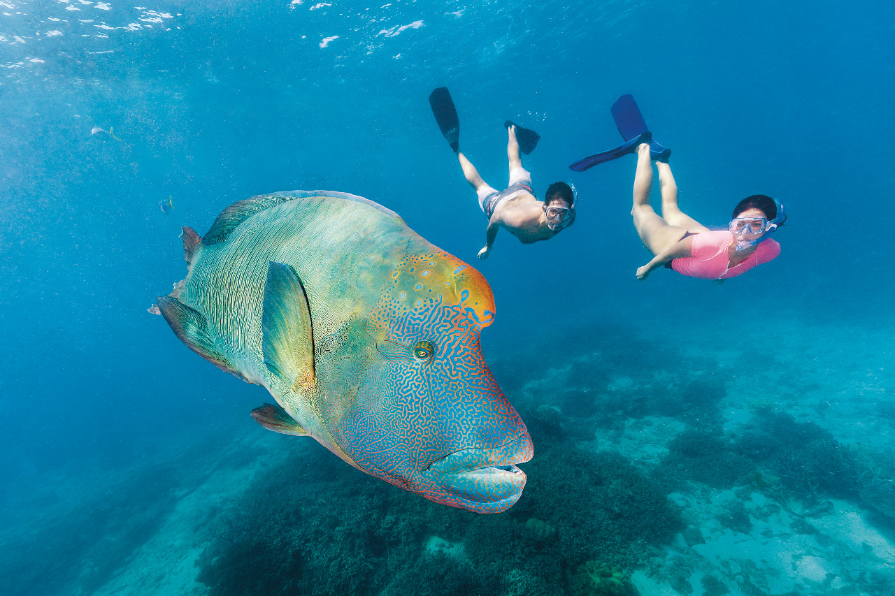 great barrier reef snorkelling tips