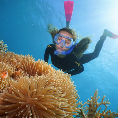 Snorkel on the Great Barrier Reef from Port Douglas Queenslandf Australia