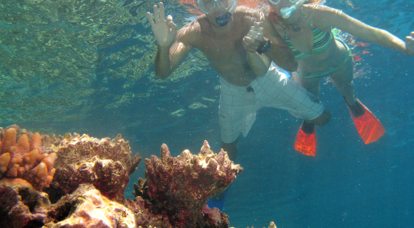 Snorkel On The Great Barrier Reef