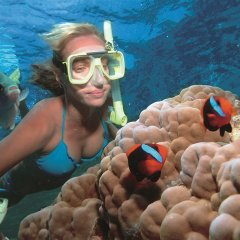 Snorkel the brilliant Agincourt Ribbon Reefs just out of Port Douglas in Queensland Australia