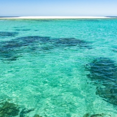 Snorkel the clear waters around Mackay Cay | Full Day Reef Tour departing Port Douglas