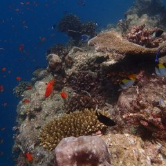 Private charter snorkel tours Great Barrier Reef Australia