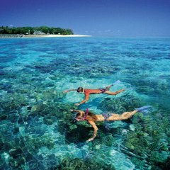Snorkel tours Green Island Great Barrier Reef Australia