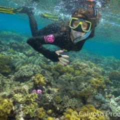 Snorkel tours in Cairns | Great Barrier Reef Tour