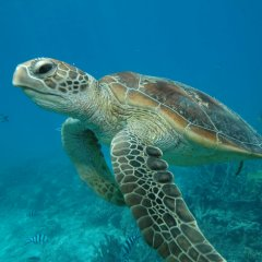 Snorkel Off The Newest Reef Boat With Sea Turtles | Great Barrier Reef Australia Day Trip