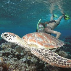 Snorkel with turtles on the Great Barrier Reef in Australia