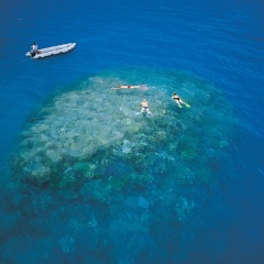 Aerial view of snorkellers on a coral bommie on the Great Barrier Reef
