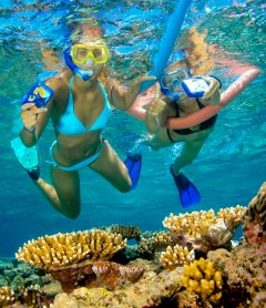 Snorkeling at Agincourt Reef | Great Barrier Reef Port Douglas