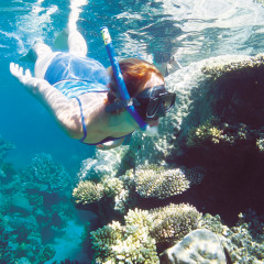 Snorkeling is easy on the Great Barrier Reef