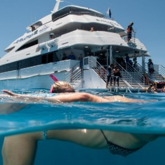 Snorkeling the Great Barrier Reef on Cruise/fly helocpter combo package deal