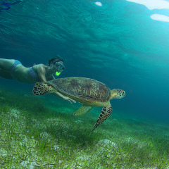 Snorkeling with a turtle on Green Island Great Barrier Reef