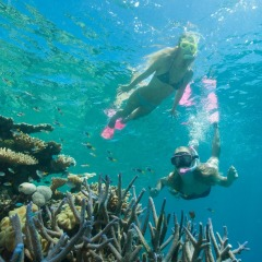 Snorkelers enjoying the Great Barrier Reef in Australia