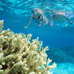 Silversonic | Great Barrier Reef Cruises Port Douglas | Dive & Snorkel