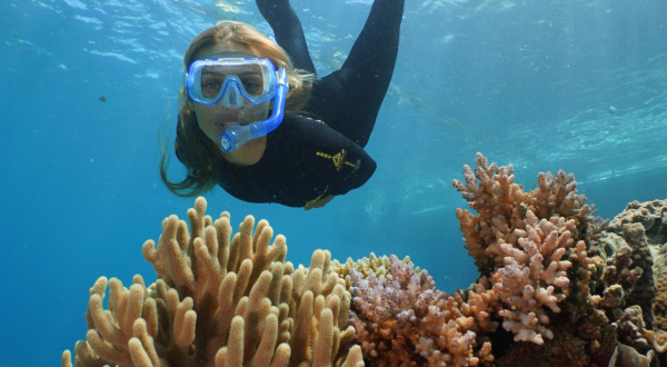 Snorkel on the Great Barrier Reef | Departs daily from port Douglas