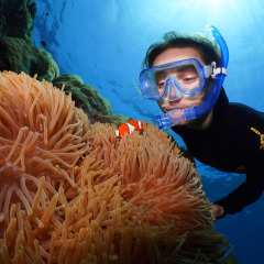 Snorkelling on Agincourt Ribbon Reefs | Outer Great Barrier Reef day trips
