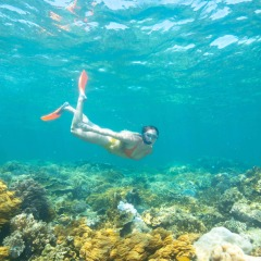 Snorkelling On The Great Barrier Reef | Moore Reef
