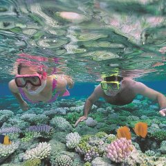 Snorkelling & diving the outer Great Barrier Reef with Quicksilver Cruises