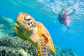 Snorkelling with turtles on the Great Barrier Reef tour from Cairns