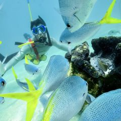 Snuba (diving) on Green Island - Go Beyond Snorkelling