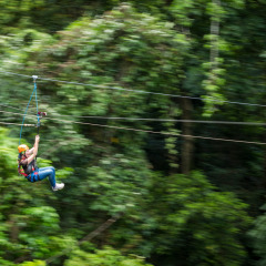 Speeding Through the Forest - Daintree Cape Tribulation Ziplining Tour