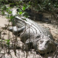 Spot a Crocodile | Private Charter Day Tour | Daintree River Cruise