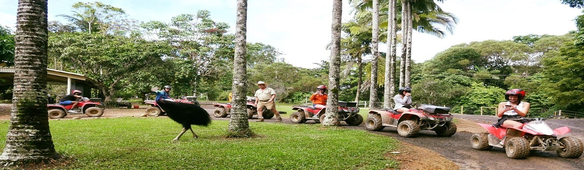 Spot Cassowaries on the ATV quad bike tour in Kuranda