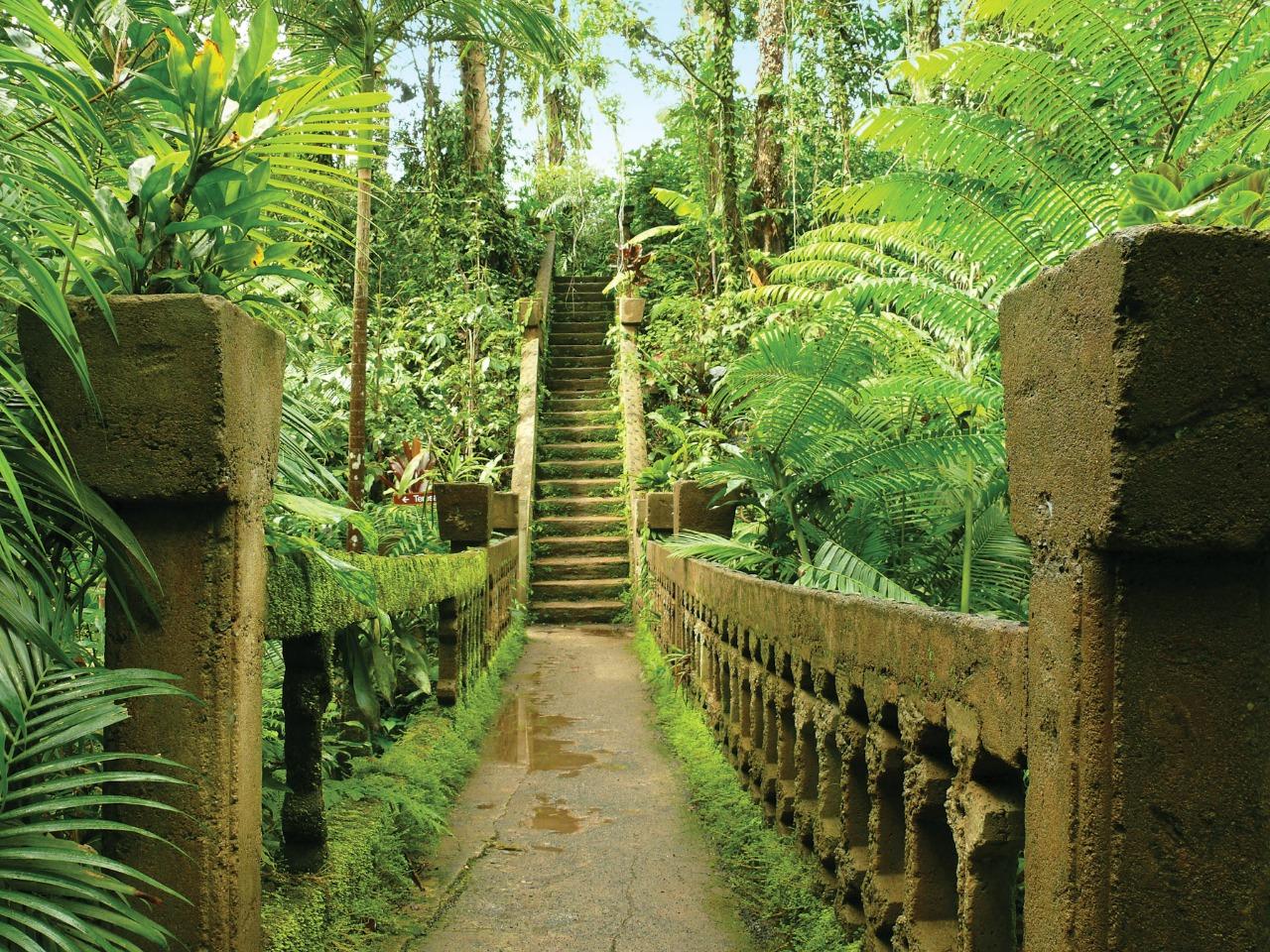 Elegant Decor Cairns Attractions Paronella Park