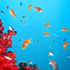 Stunning Great Barrier Reef Underwater Shot