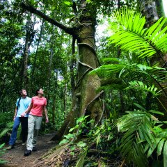 Rainforest Walk at Mossman Gorge on 3 Day Cooktown 4WD Tour