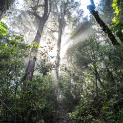 Sunshine peeking thru the Cairns Rainforests