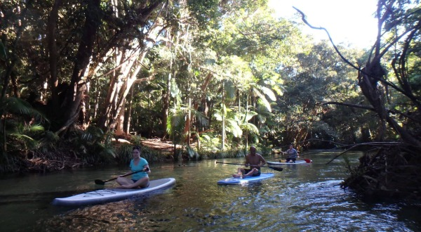 SUP Boarding On The Mossman Gorge | Half Day Tour From Port Douglas