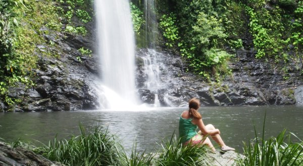 Full Day Tour | Mossman Gorge, Daintree River, Cape Tribulation | Swim At Cassowary Falls
