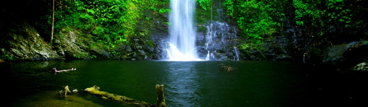 Swim in the stunning Cassowarry Falls on your Daintree Tour