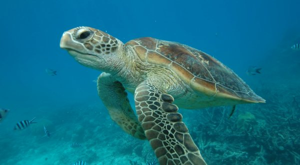 Swim with 6 varieties of turtles on Australia's Great Barrier Reef
