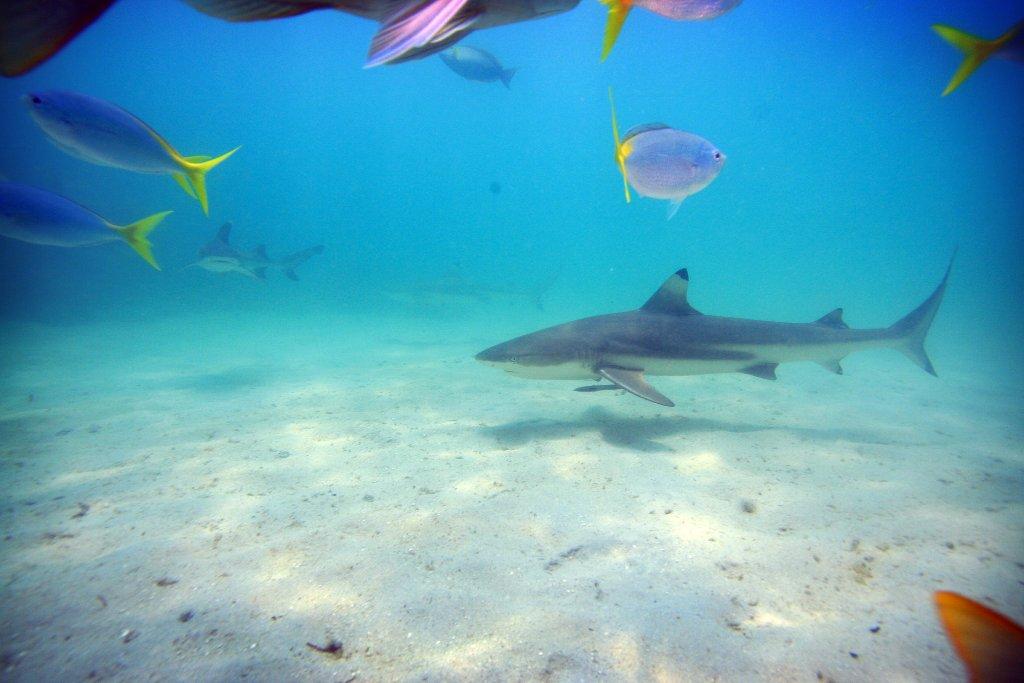 Best Diving Island Great Barrier Reef
