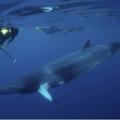 Swim With The Minke Whales | 4 Nights Liveaboard Great Barrier Reef Trip