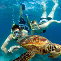 Swim with turtles on Green Island