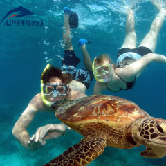 Swim with turtles on your Green Island snorkel trip