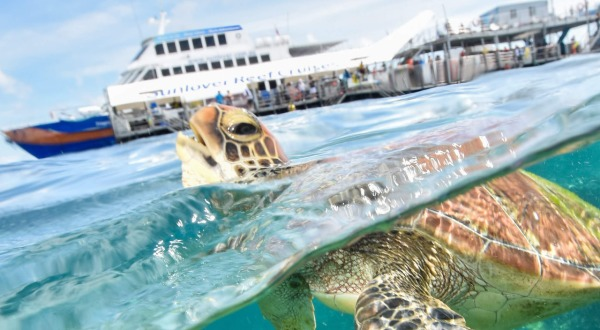 Swim with turtles on the Cairns reef trip