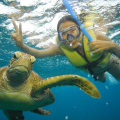 Great Barrier Reef Tour | Swim with Turtles