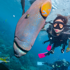 Swim with Wally the famous Maori Wrasse fish and take a selfie