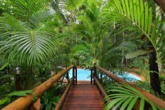Swimming Pool Surrounded by Rainforest - Daintree Rainforest Holiday Home