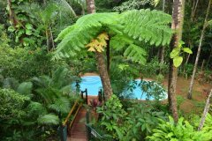 Swimming Pool Surrounded by Rainforest