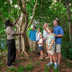 Take a guided walk with Aboriginal in Cultural Park tour in Cairns