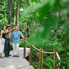 Take a ranger guided boardwalk tour of the rainforest from the skyrail station