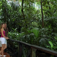 Take a self guided tour or book a back of house tour at the Wildlife Habitat in Port Douglas Queensland Australia